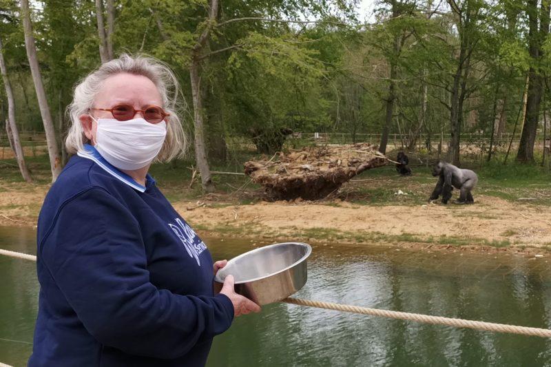 Marie en immersion avec les gorilles